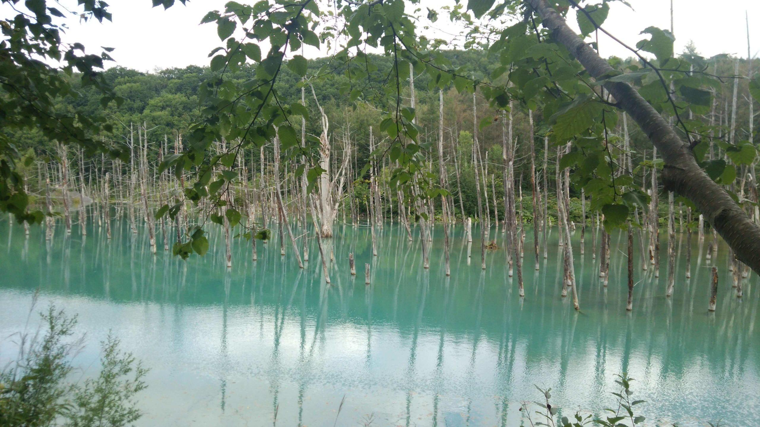 青い池 画像