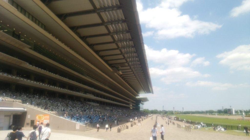 東京競馬場 画像