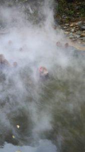 地獄谷野猿公苑 画像